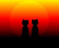 Katten bij Zonsondergang Stock Foto's