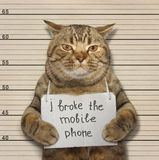 Katten bröt telefonen Fotografering för Bildbyråer