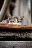 Katten döljer fotografering för bildbyråer