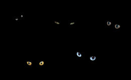Katten in Dark Stock Afbeeldingen