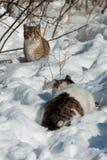 Katten in de winter op sneeuw Stock Afbeeldingen