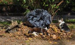 Katten die in de bladeren, de herfst slapen Stock Foto