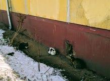 Katten die in de zon in Maart liggen stock fotografie