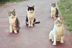 Katten die in rij zitten Royalty-vrije Stock Fotografie