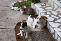 katten dogs en två Arkivbilder
