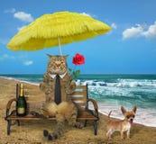 Katten dricker vin på stranden vektor illustrationer