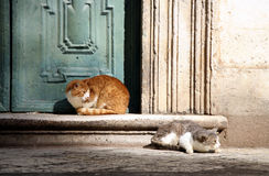 Katten in Dubrovnik royalty-vrije stock afbeelding