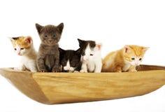 Katten in een Kom Stock Fotografie