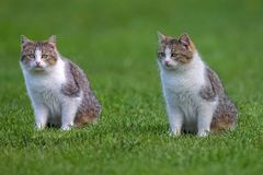 Katten in een opheldering stock fotografie