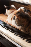 Katten in een Piano Stock Foto
