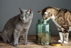 Katten en Cat Food in Glas Stock Foto's