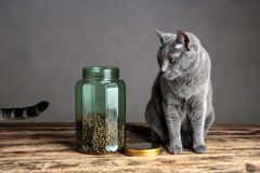 Katten en Cat Food in Glas Stock Foto
