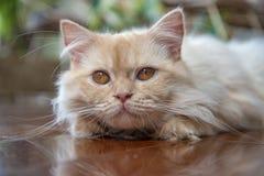 Katten en kattenzieken met koude royalty-vrije stock foto's