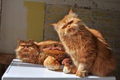 Katten en paddestoelen royalty-vrije stock foto's