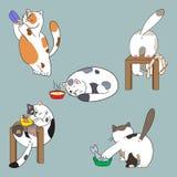 Katten en voedselinzameling Stock Foto