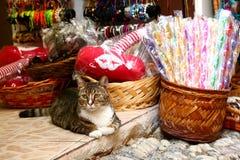Katten en winkels royalty-vrije stock afbeelding