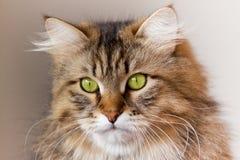 katten eyes den gröna ståenden Arkivfoto