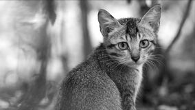 katten eyes det SAD kattungefotoet royaltyfria foton