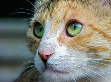katten eyes green royaltyfri foto