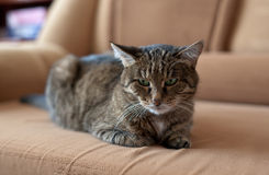 katten eyes green royaltyfria foton