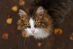 katten eyes green arkivbild