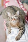 katten eyes pottet wide Fotografering för Bildbyråer