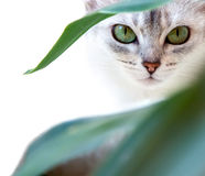 katten eyes s Royaltyfria Bilder