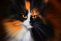 katten eyes s Arkivbilder