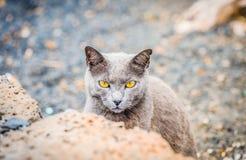 katten eyes yellow Arkivbild