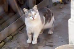 katten eyes yellow Arkivfoto
