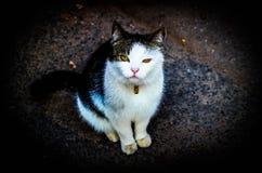 katten eyes yellow Fotografering för Bildbyråer