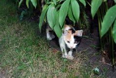 katten färgade tre royaltyfria bilder