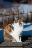 katten färgade tre arkivbilder