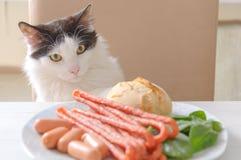 Katten försöker att stjäla mat från tabellen Royaltyfria Foton