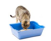 Katten forskar in i den fyllda toaletten Royaltyfria Bilder
