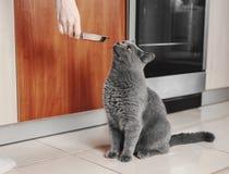 katten frågar att äta, den hungriga katten royaltyfri bild