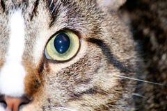 Katten från taket royaltyfri fotografi