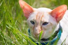 Katten går Royaltyfria Foton