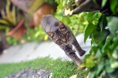 Katten går arkivfoto