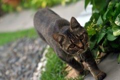 Katten går Royaltyfri Foto