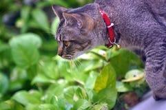 Katten går Fotografering för Bildbyråer