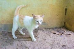 Katten går bredvid en vägg Arkivbild