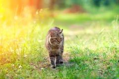 Katten går i skogen royaltyfri foto
