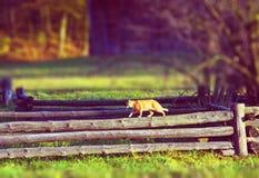 Katten går på ett trästaket i en by Arkivbild