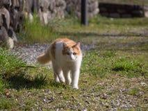 Katten går på gatan royaltyfria foton