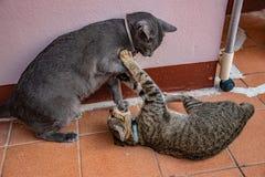 Katten in gebaren royalty-vrije stock foto's