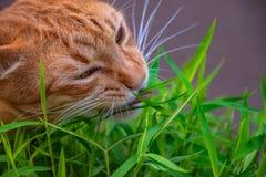 Katten in gebaren royalty-vrije stock afbeeldingen