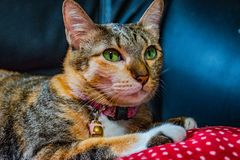 Katten in gebaren stock foto