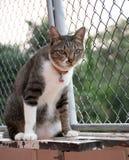 Katten in gebaren stock afbeeldingen