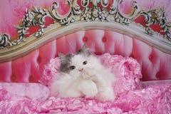 Katten gick att bädda ned i en rosa säng arkivfoton
